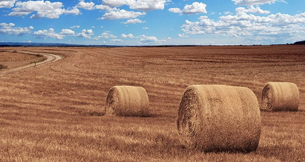 Agriculture key to Canadian economy: StatsCan