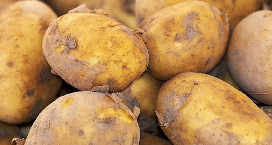 Alberta vies with P.E.I. to be potato capital of Canada