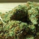 pot cannabis marijuana