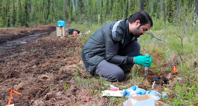 How changes in ancient soil microbes could predict Arctic future