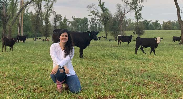 New research to fill a critical gap in beef production system