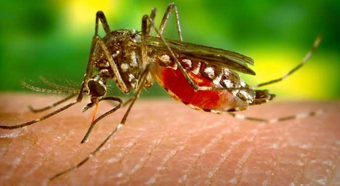 Biophysicists target mechanism that makes Zika virus so dangerous