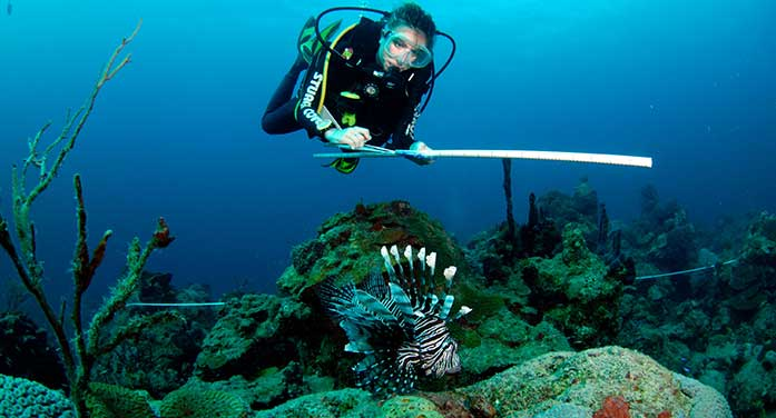 Predicting which species most at risk from voracious lionfish predators
